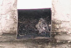 Pigeon nest cloging a roof drain backing up the water to the roof